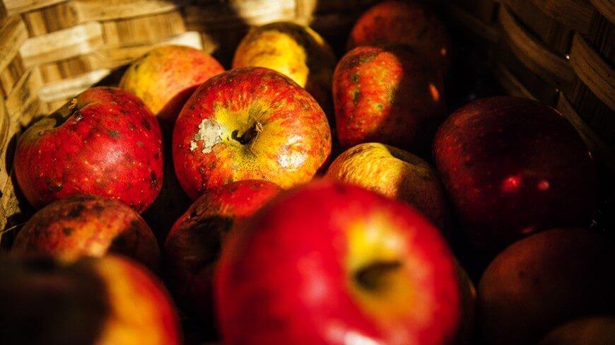 Cocinar con Manzana